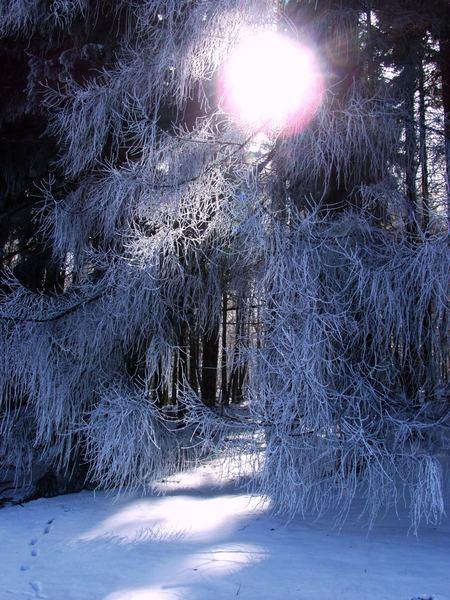 Erstes Licht am Wintertag
