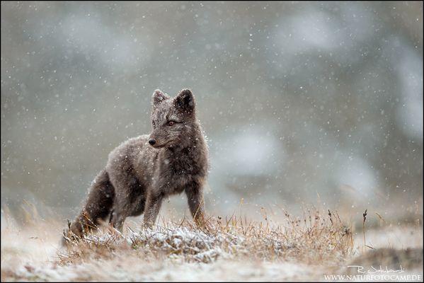 Erstes Schneetreiben