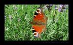 Erstversuch Schmetterling August 2005