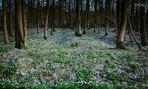 Erwachen im Wald