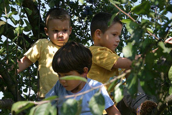 """Erwischt! Geschwister """"Fürchterlich"""" im Pflaumenbaum...."""