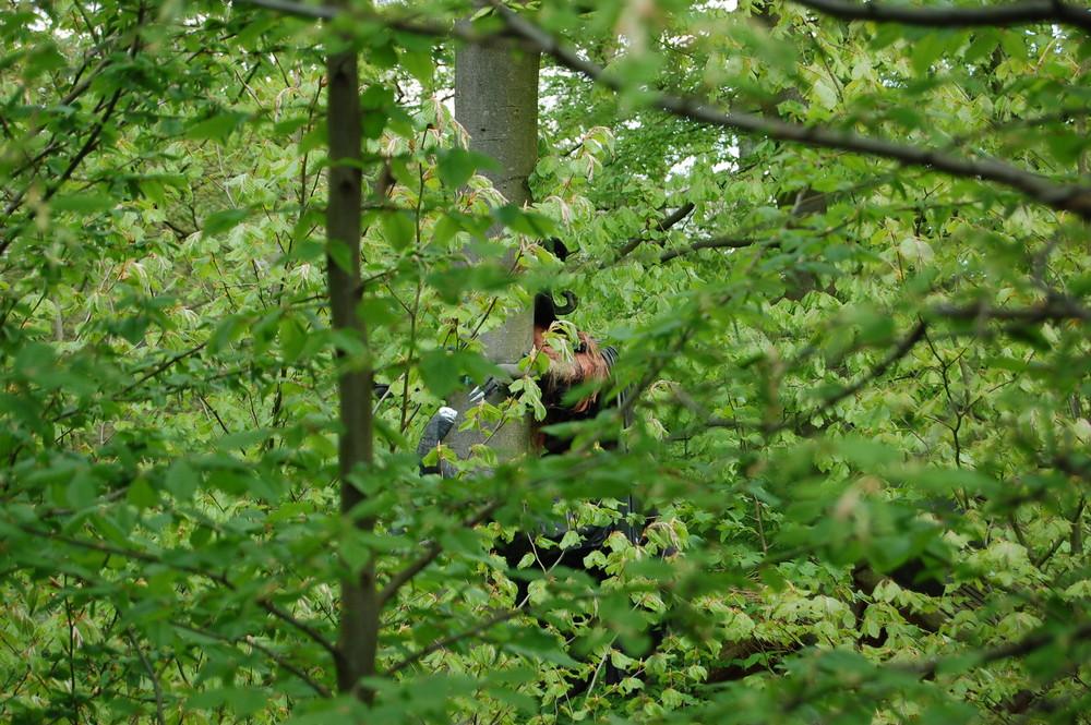 ERWISCHT: Waldwesen