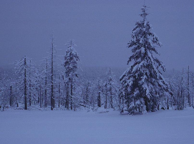 Erzgebirge im Winter 11