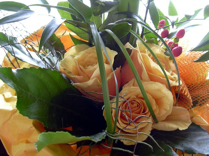 es blühen die Rosen