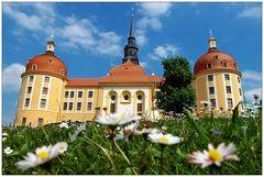 Es blüht am Schloß Moritzburg