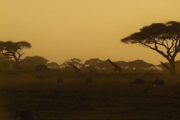 Es dämmert mir, ich muss zurück nach Kenia!