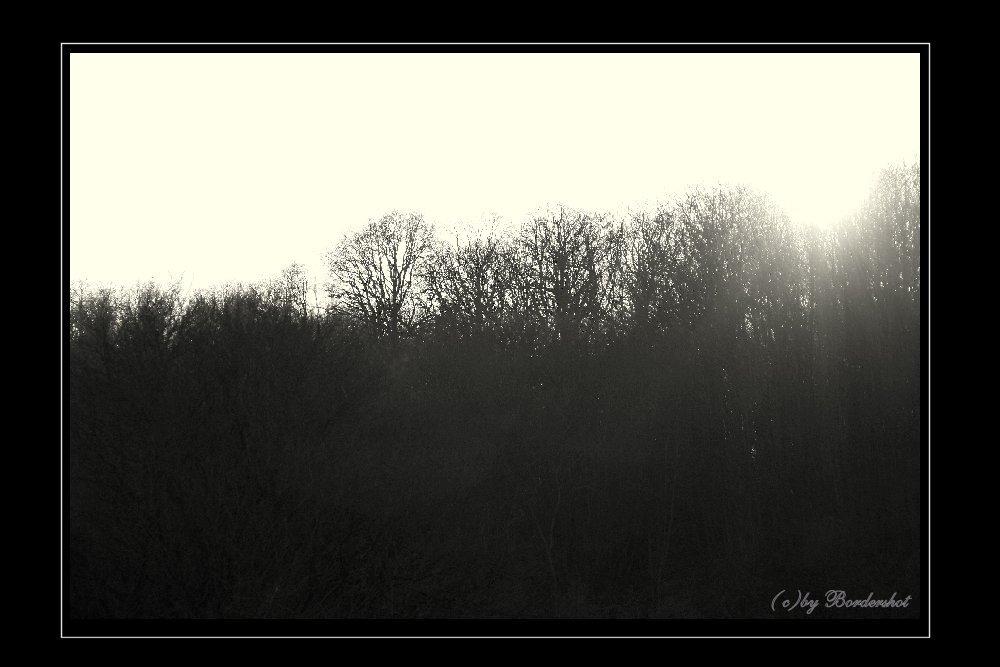 es dunkelt im Wald