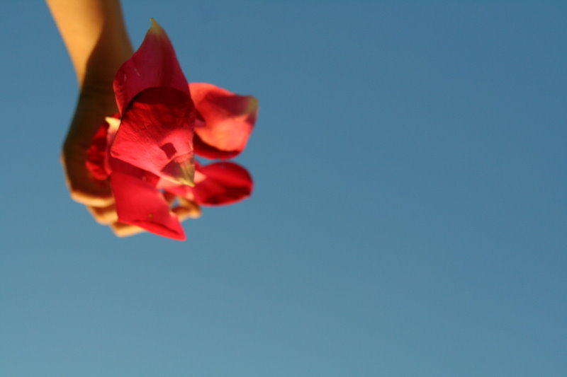 Es fallen Rosenblätter
