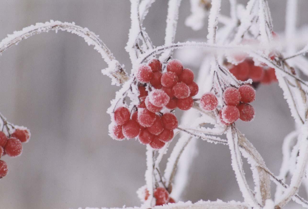 es geht los der winter beginnt foto bild pflanzen pilze flechten pflanzen im winter. Black Bedroom Furniture Sets. Home Design Ideas