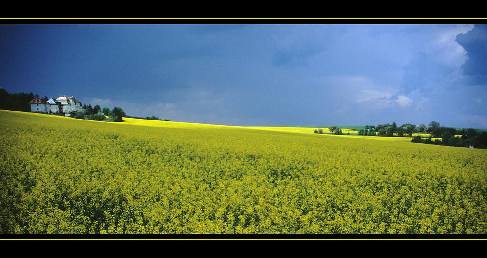 Es gelbt so Gelb...