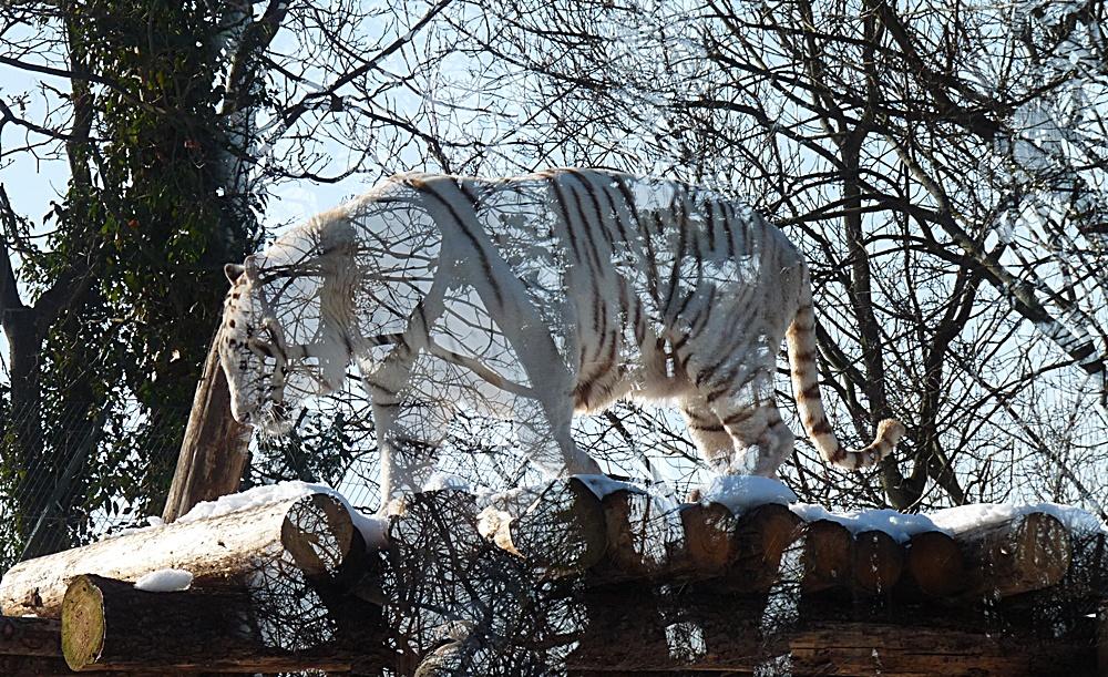 Es gibt neue Tiere in unserem Zoo :-))