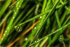 Es glitzert im Gras