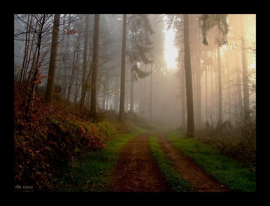 es grünt im Nebelwald
