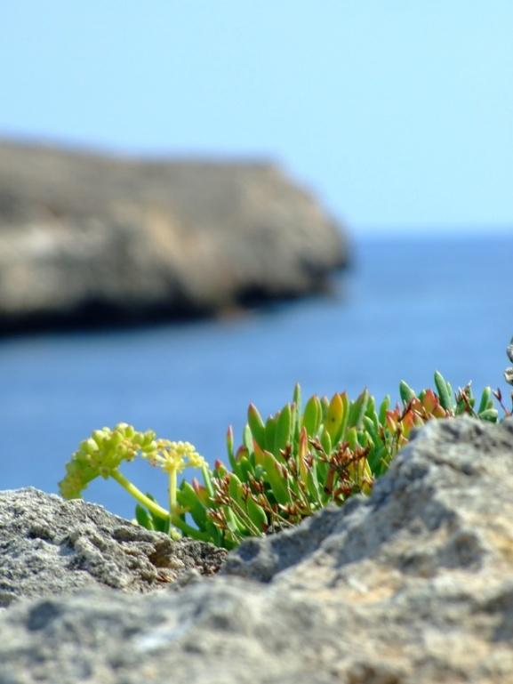 Es grünt so grün am blauen Meer