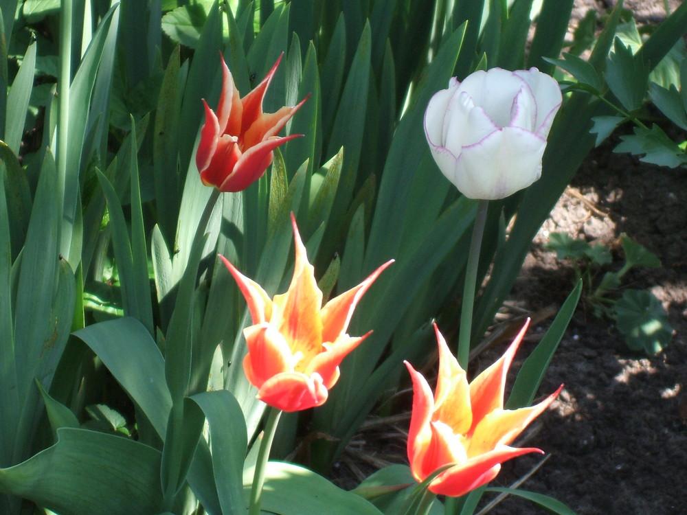 Es grünt und blüht ,der Frühling ist nicht aufzuhalten
