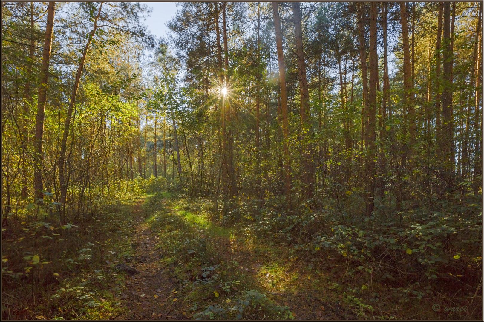 Es herbstelt im Wald