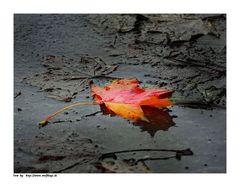 Es ist die Zeit.....der bunten Blätter