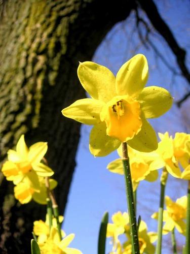 Es ist Frühling 2