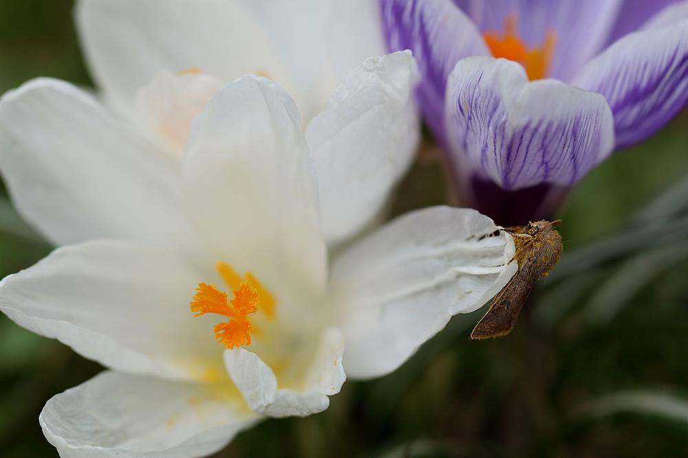 Es ist Frühling..............