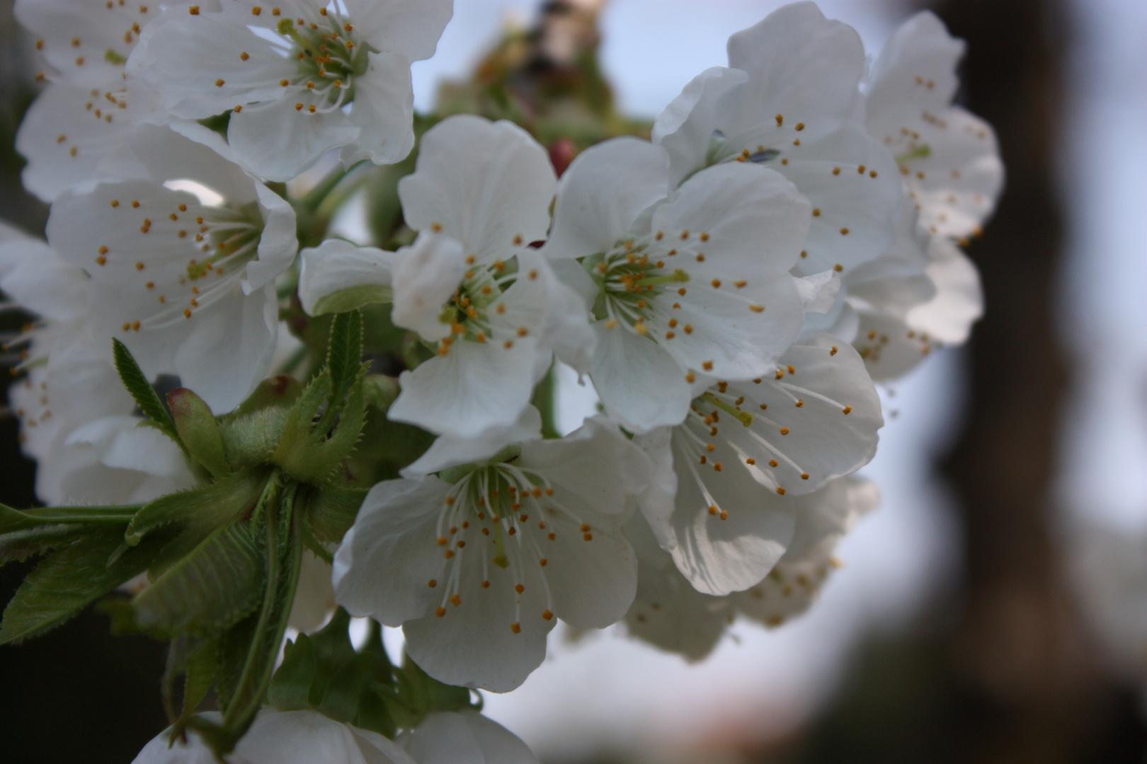Es ist Frühling