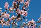 Es ist Frühling in Javea 03