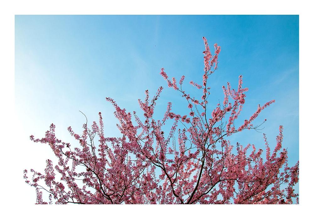 Es ist Frühling und die Bäume schlagen aus