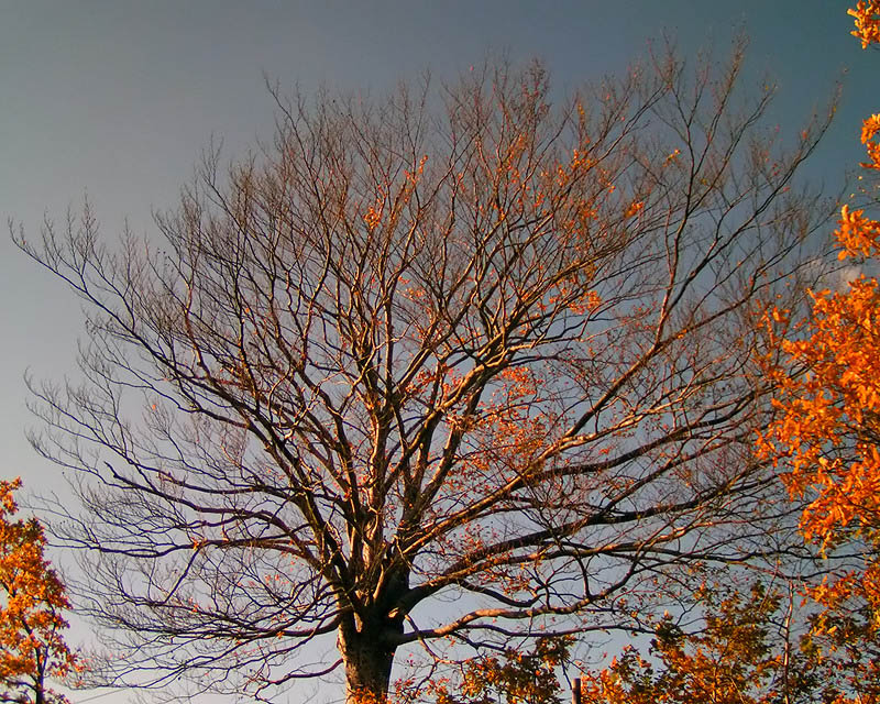 Es ist Herbst 1