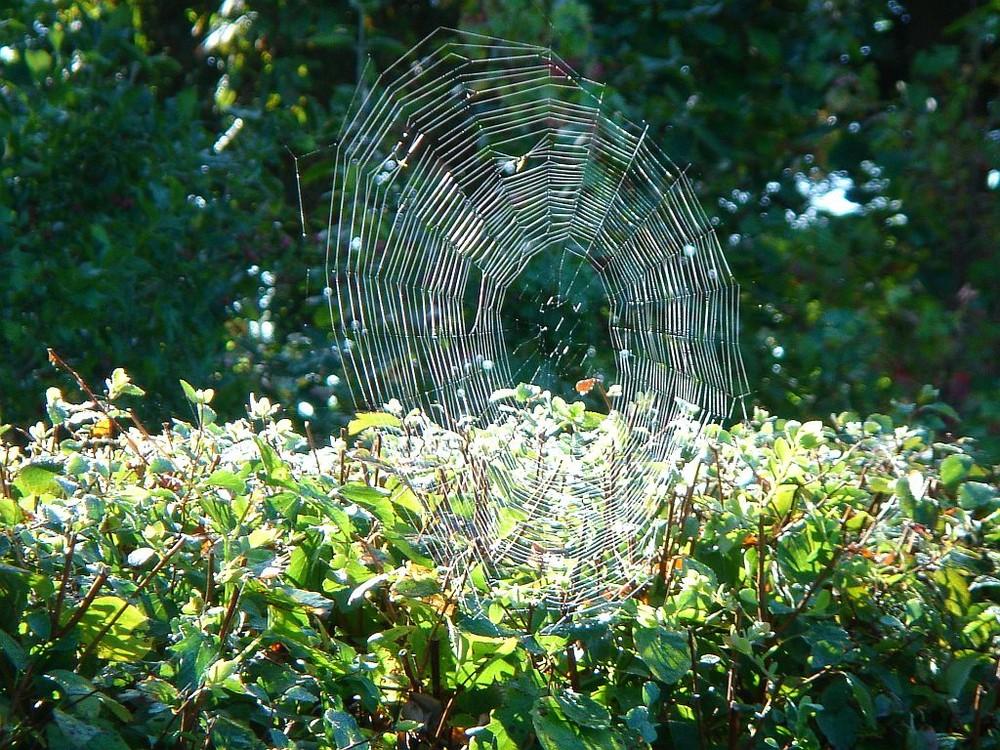 Es ist Herbst - die Spinnen sind da!