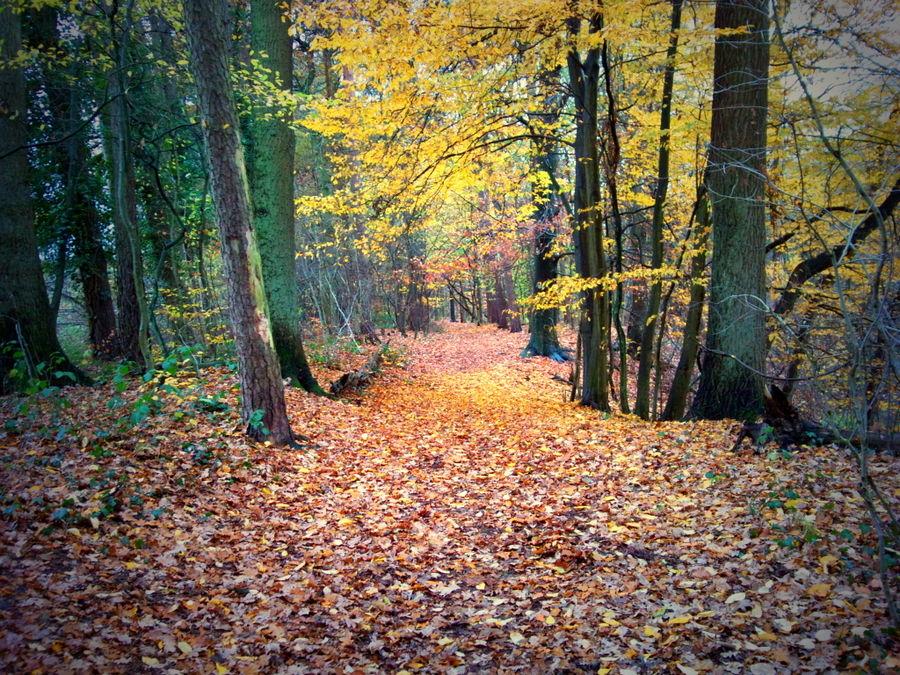 ....es ist Herbst in Bielefeld-Dalbke
