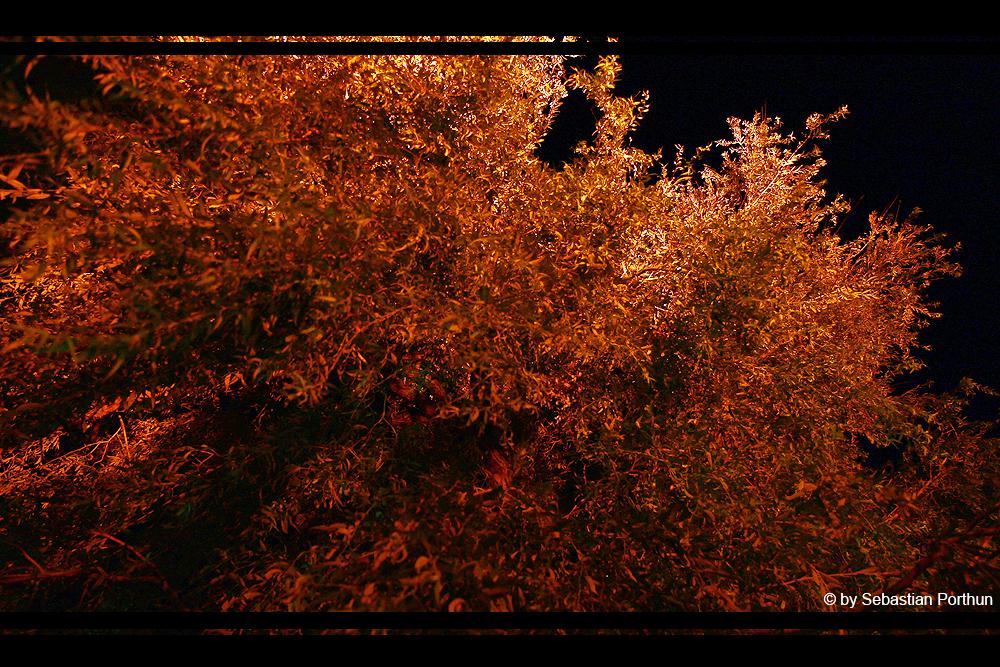 es ist Herbst in Lüneburg
