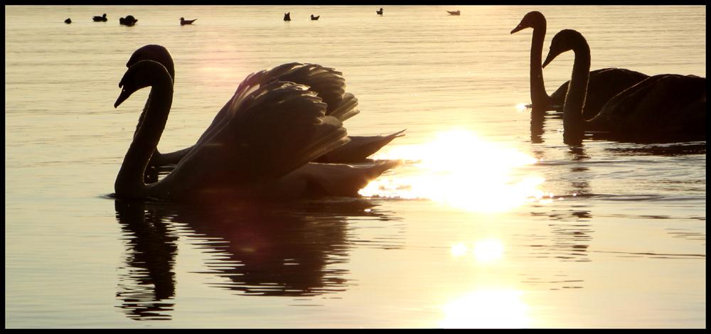 """""""Es ist immer noch am schönsten, in der 'Sonne' zu schwimmen"""" [ # 2 ]"""