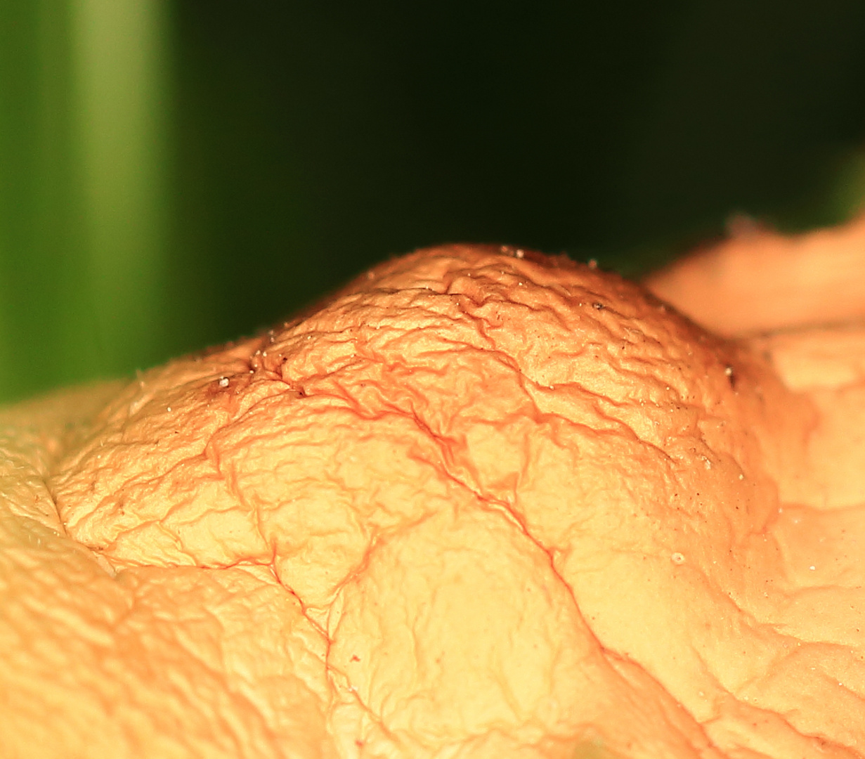 Es ist nicht meine Haut - was ist es dann ????