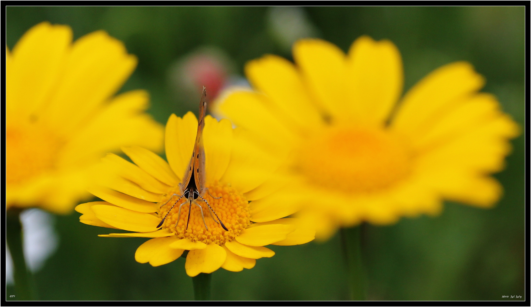 es ist Schmetterlingszeit