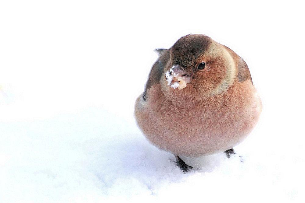 Es ist zum Schnee fressen.....