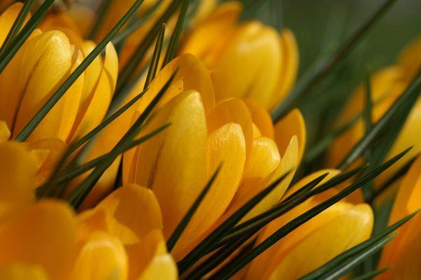 Es kommt bald der Frühling
