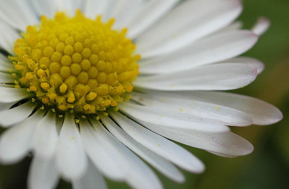 Es kommt der kleinen Frühling...