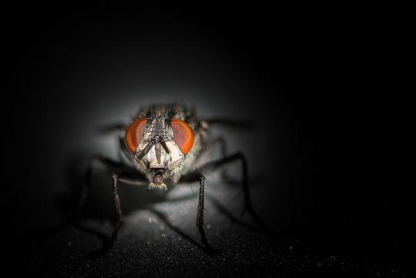 Es kommt - die Fliege II