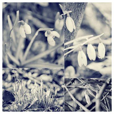 Es läutet den Frühling ein....