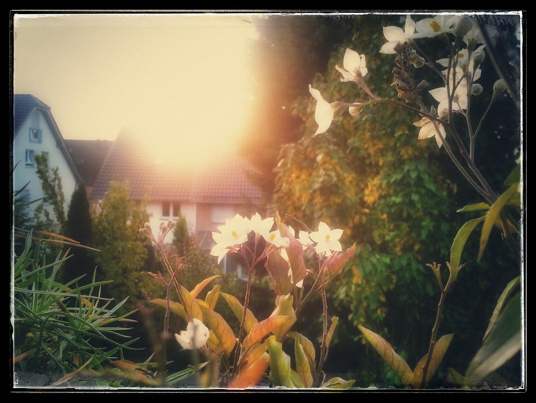 es lebe Balkonien im Herbst