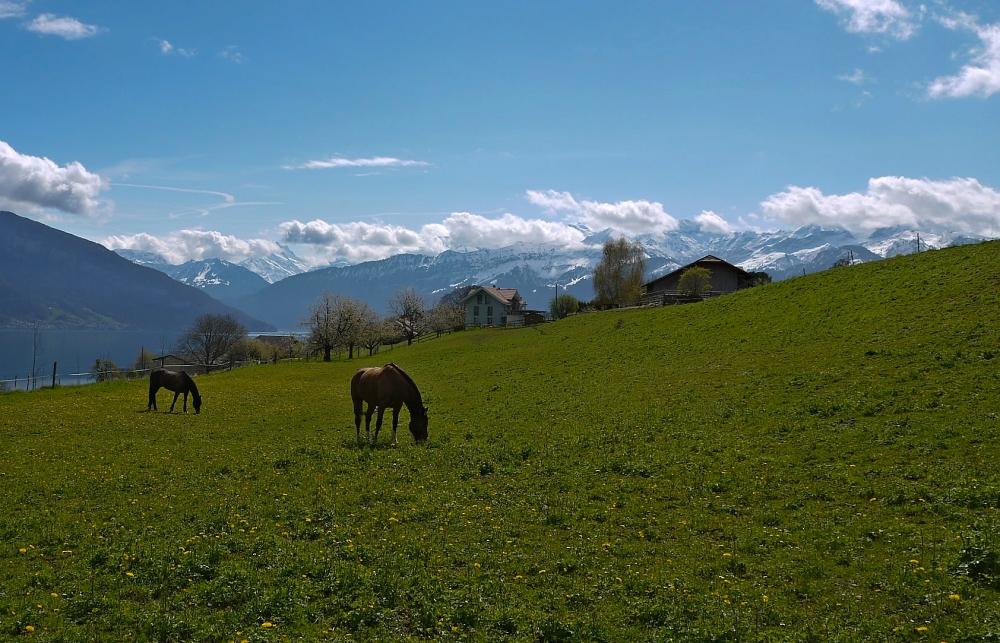 es lohnt sich für die Pferde wieder auf die Felder zu gehen..