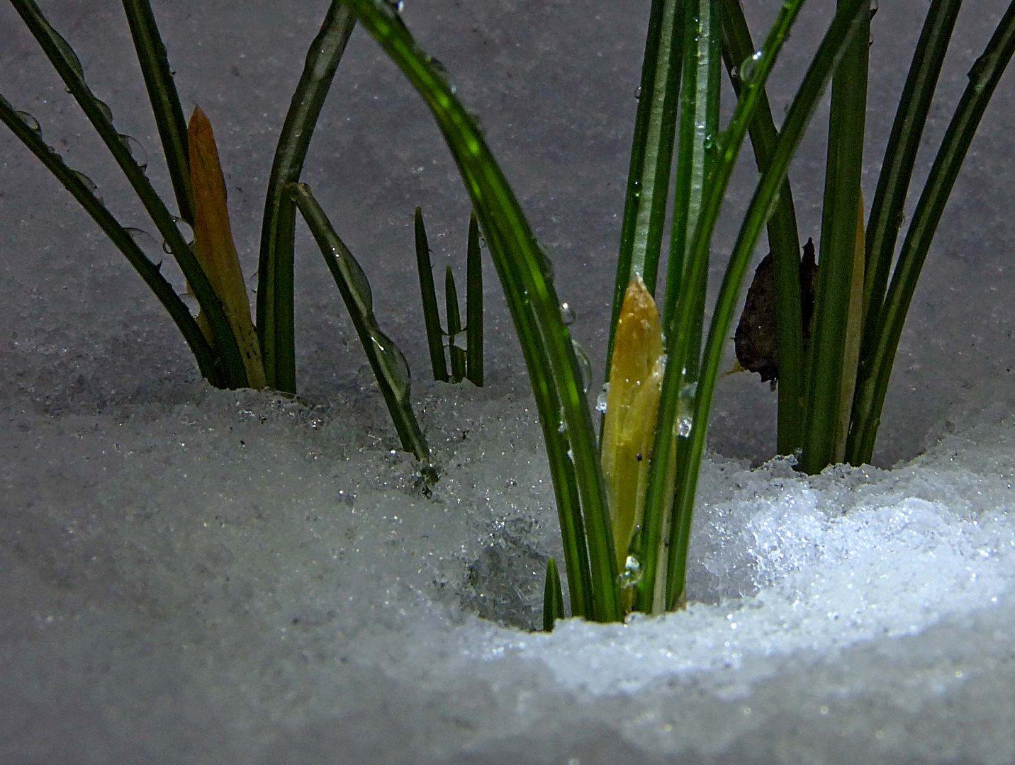 ...es muß doch Frühling werden