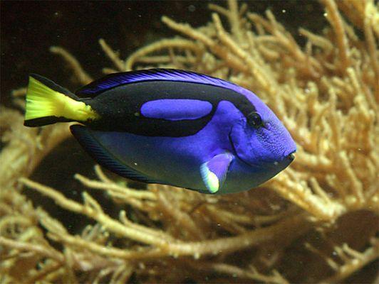Es muss nicht immer Nemo sein ...