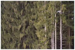 es nimmt einfach kein ende. schon das zweite bild mit bayrischen koniferen.