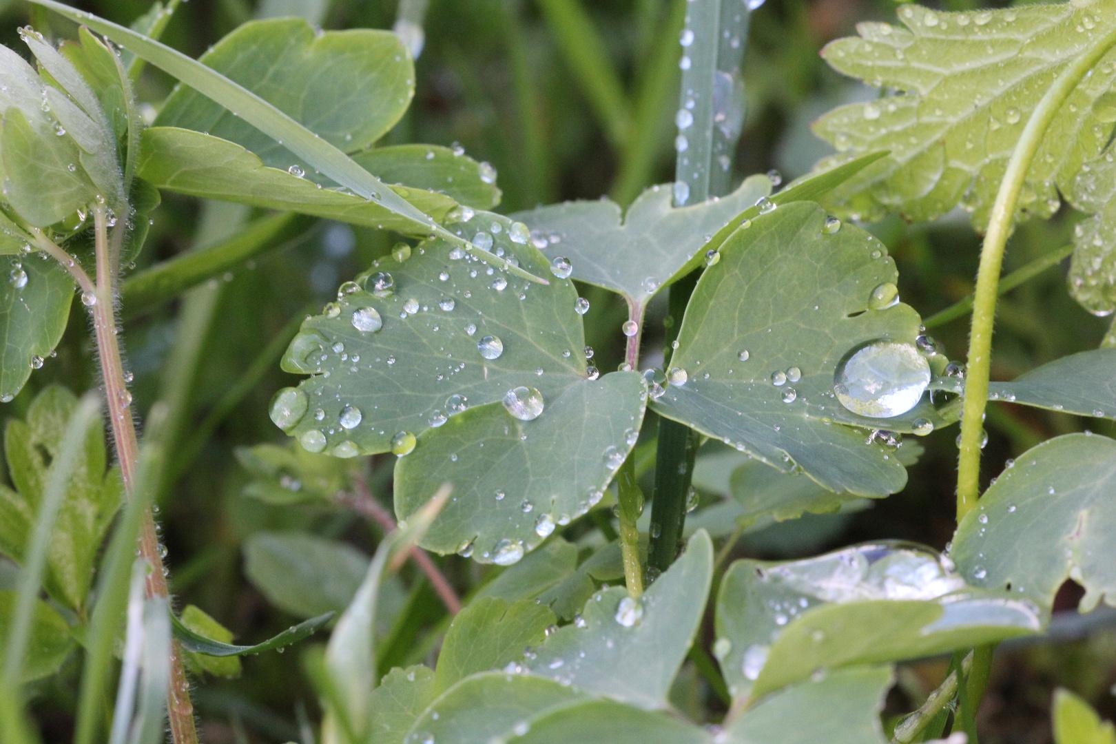 Es regnete auch an Pfingsten