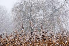 Es schneit # 9337
