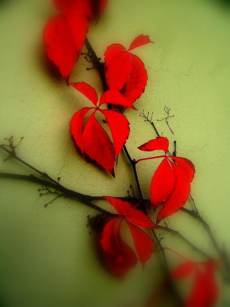 Es sind doch nur Blätter