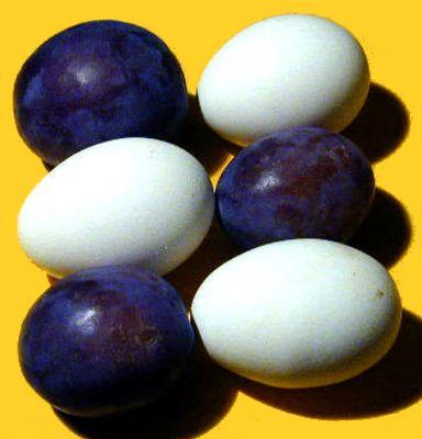 es sind Eierpflaumen