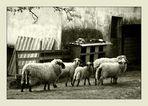 Es sind Schafe!
