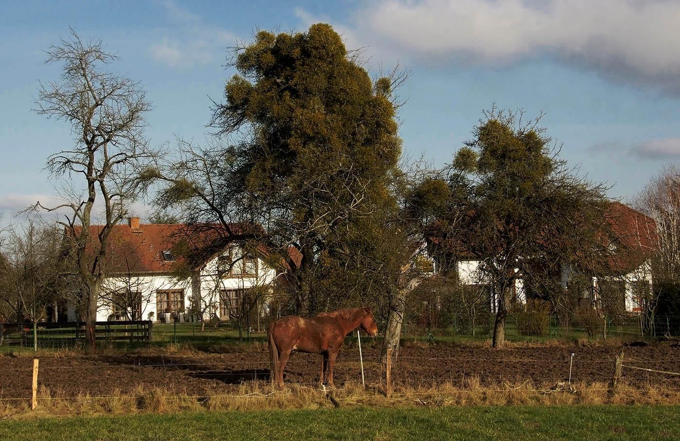 Es steht ein Pferd hinterm Haus ....