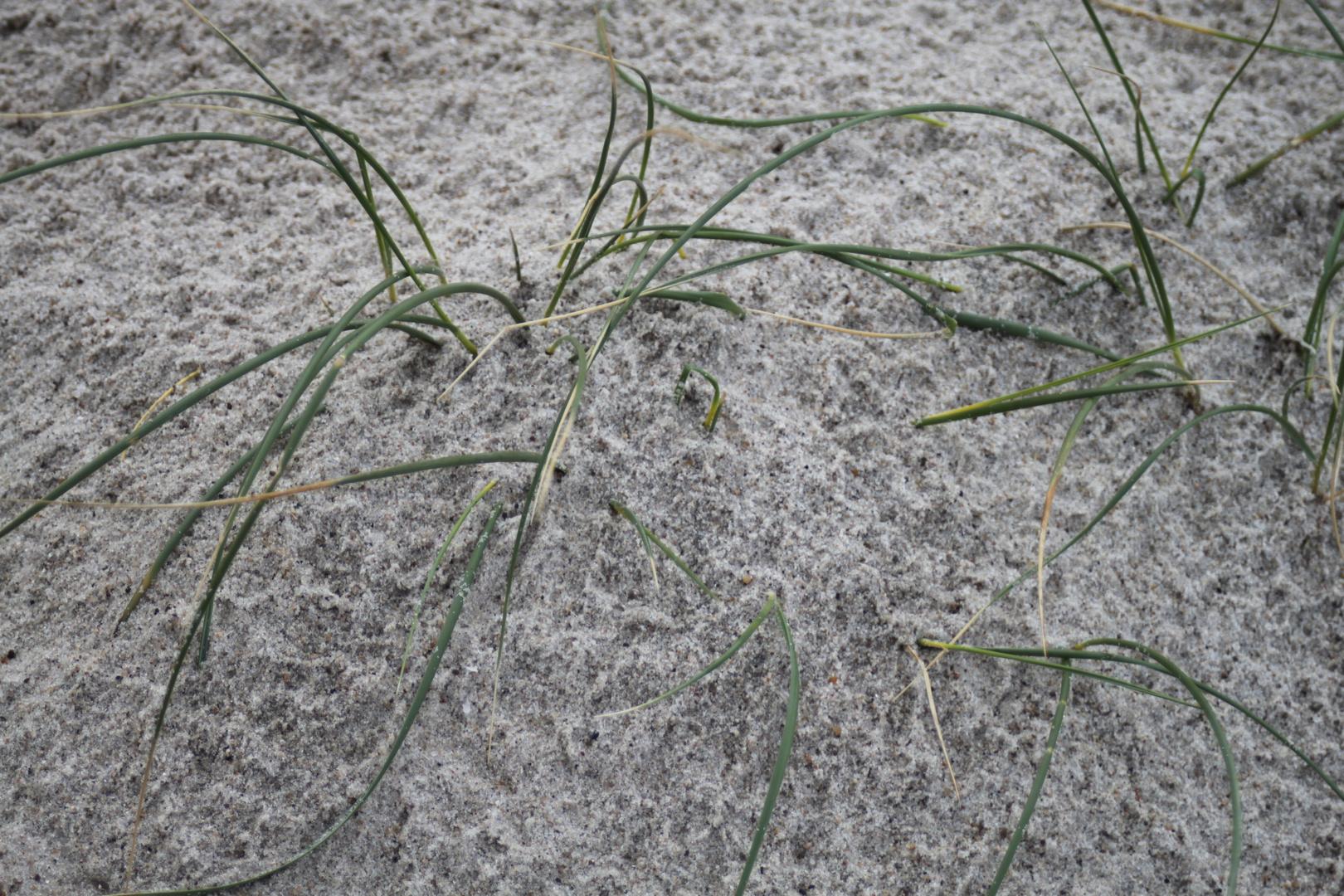 es wächst doch Gras im Sand.........